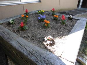 まごころ・絆の花壇の様子