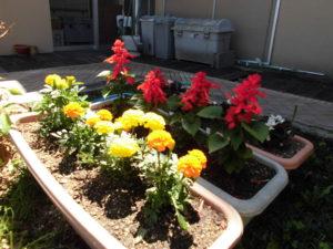 笑楽の花壇の様子